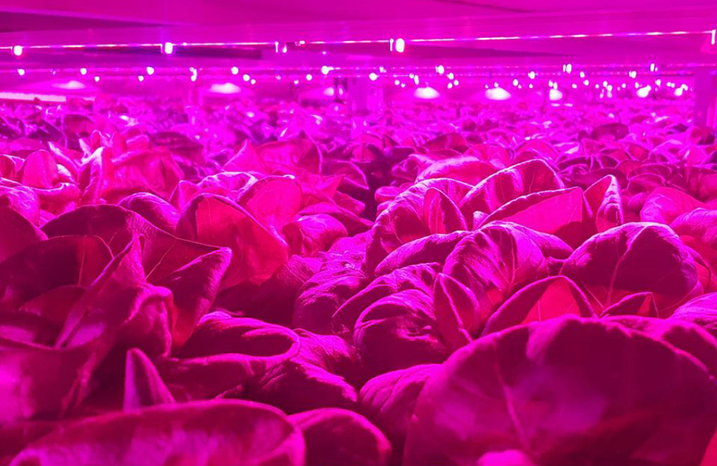 Study: The financial impact of vertical farming