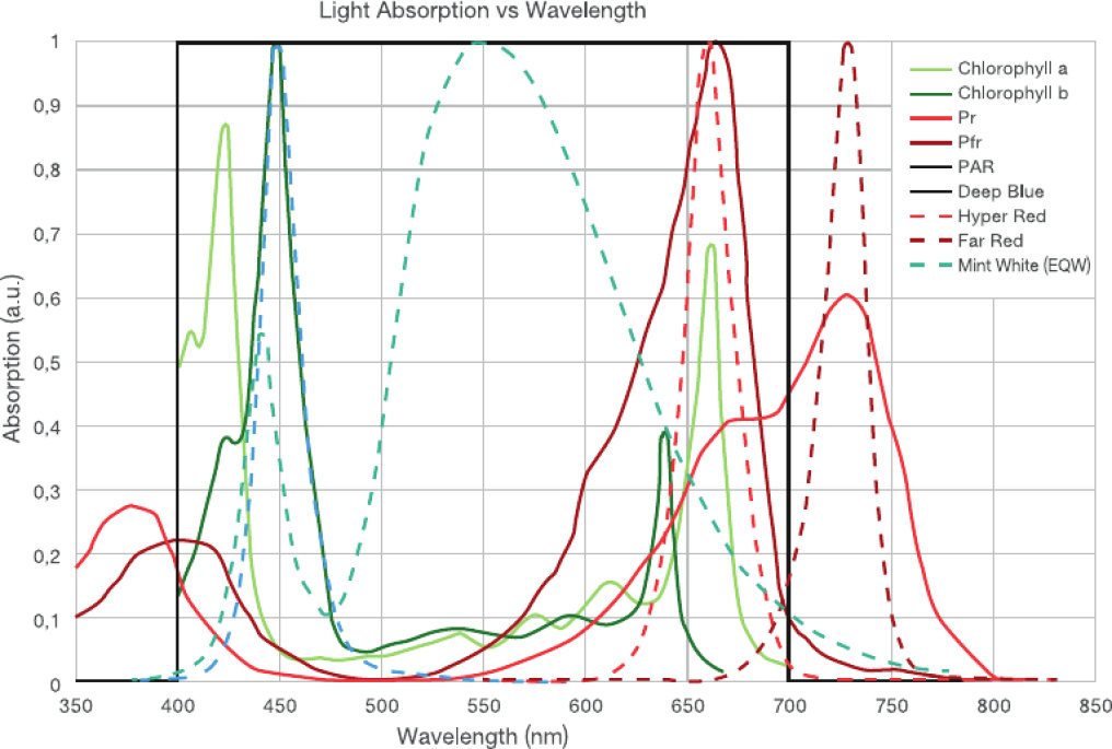 Light Absorption vs Wavelength