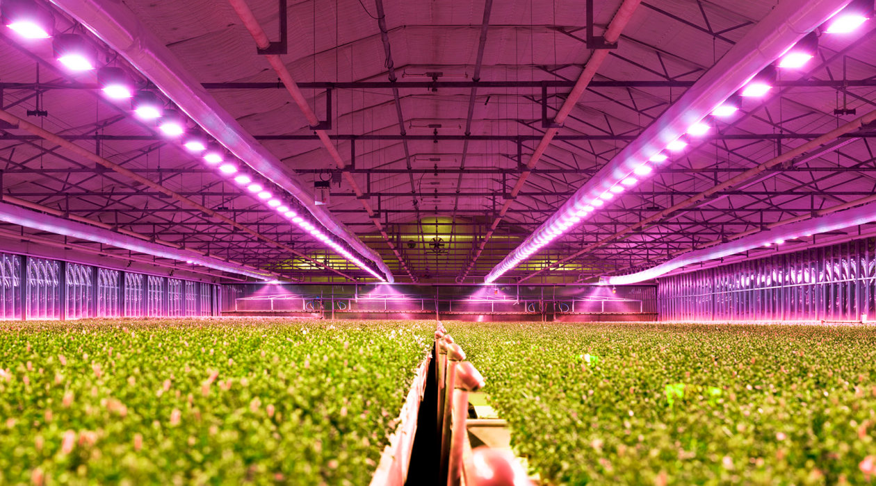 LEDs for Horticulture Lighting