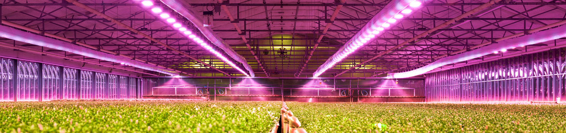 LED Solutions for Horticulture