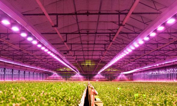 Iluminación para Horticultura - LED, componentes, productos y soluciones para la iluminación de cultivos, granjas urbanas y bioingeniería basada en LED