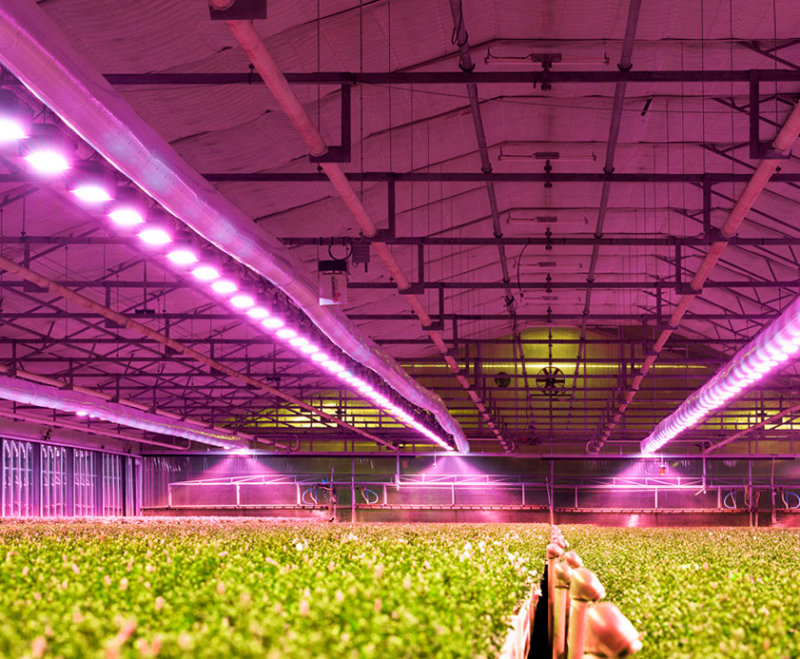 Horticulture professional and industrial applications zelion hl300 for greenhouse lighting aloadofball Images
