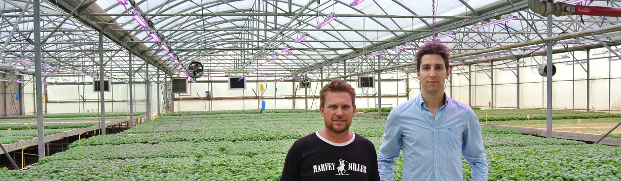 Requalification to LED lighting in greenhouses of S.A.Ba.R. S.p.A.