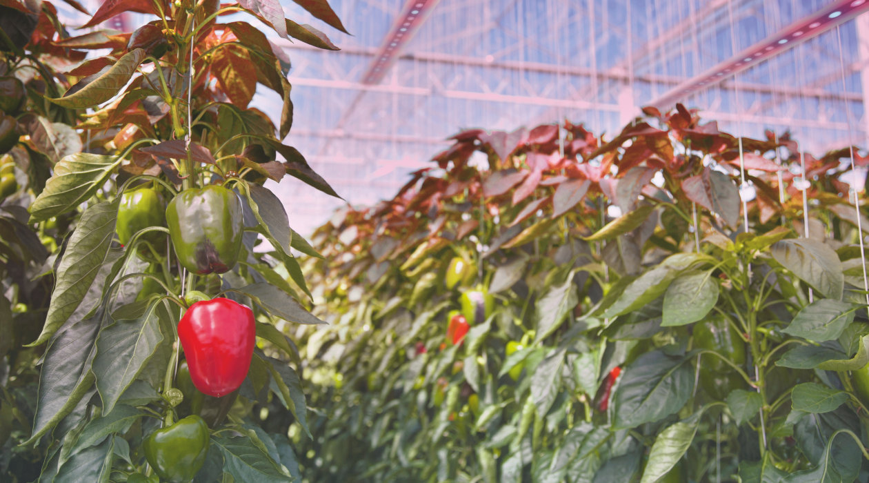 ILS Horticulture Development Kits