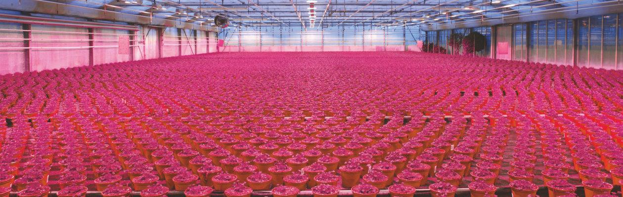 Horticulture Advantages