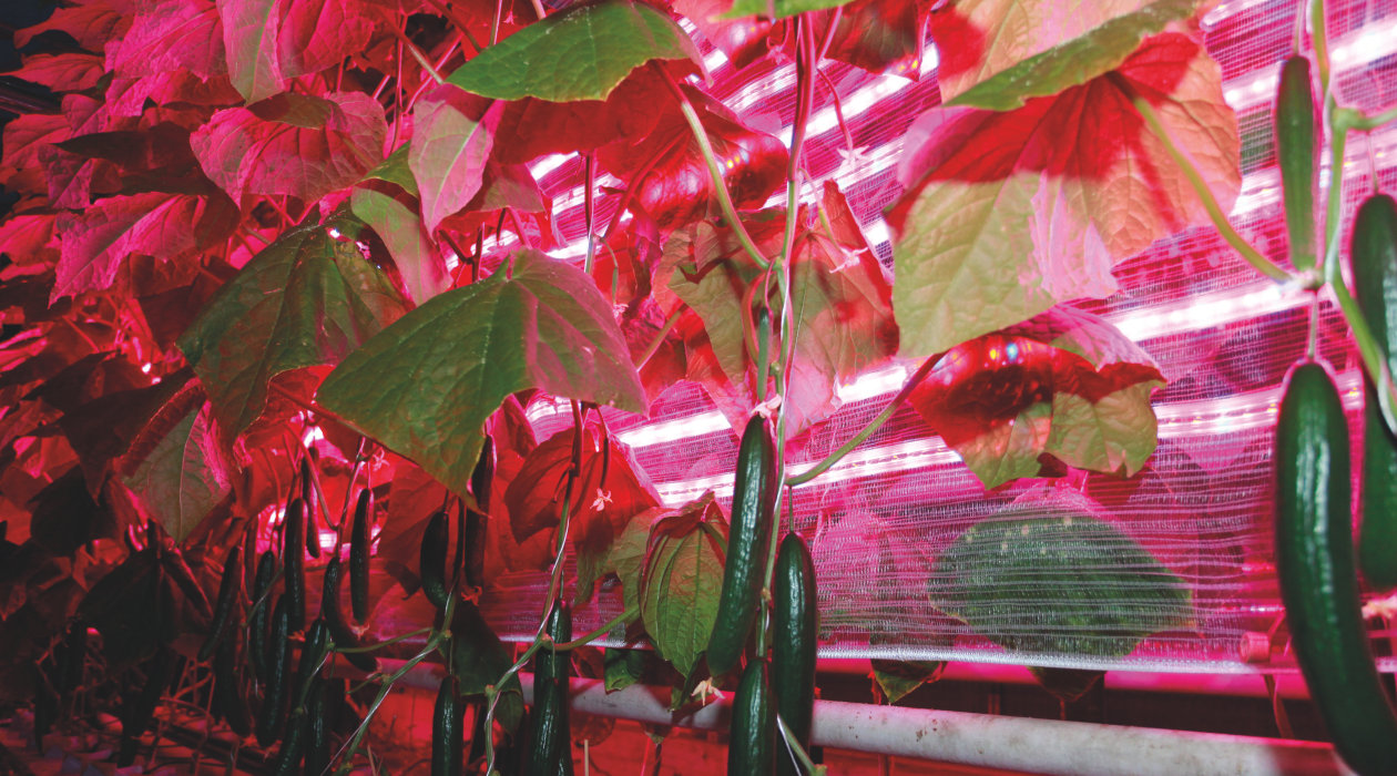 LEDs and LED Systems for Horticultural Growth 2019 Seminars