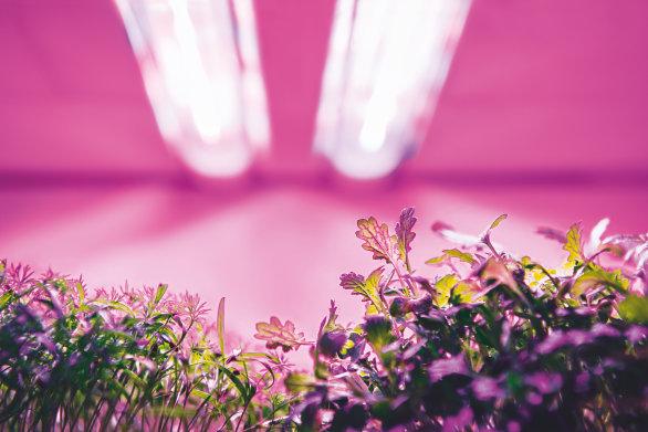 Horticulture Webtool