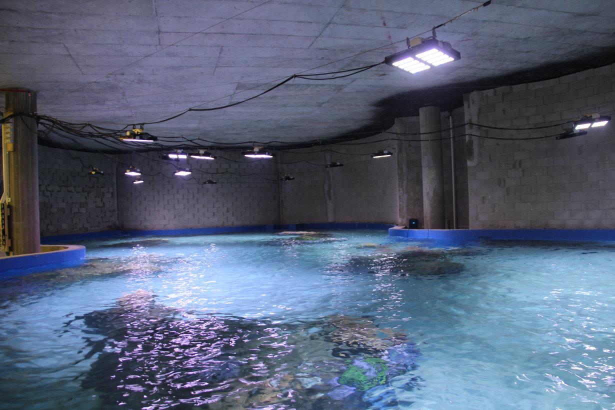 Aquarium ISRAEL