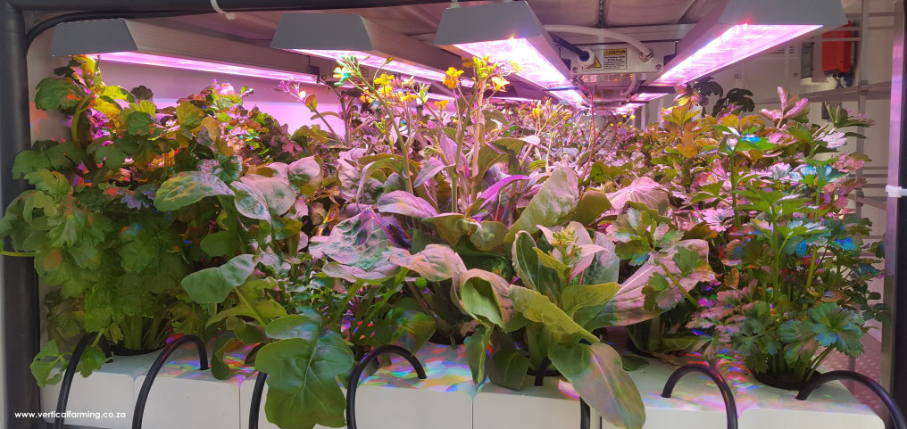 New partner hightlight: Vertical Farming within a shipping container