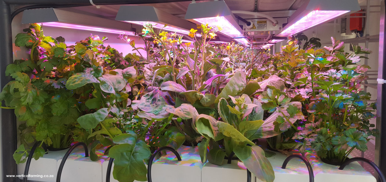 Horticultural Luminaire for Vertical Farming