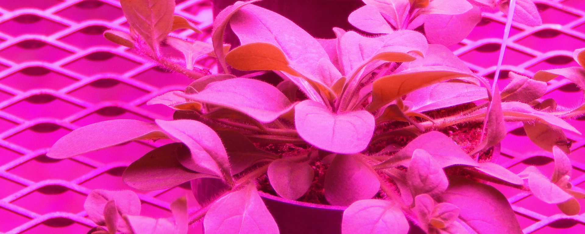 Horticulture lighting -seeded by LEDs
