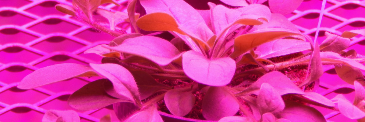 White Paper – horticulture lighting – seeded by LEDs