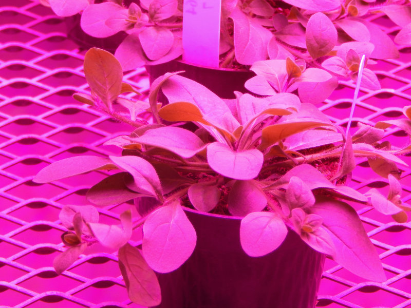 Horticulture Lighting - Growing Life