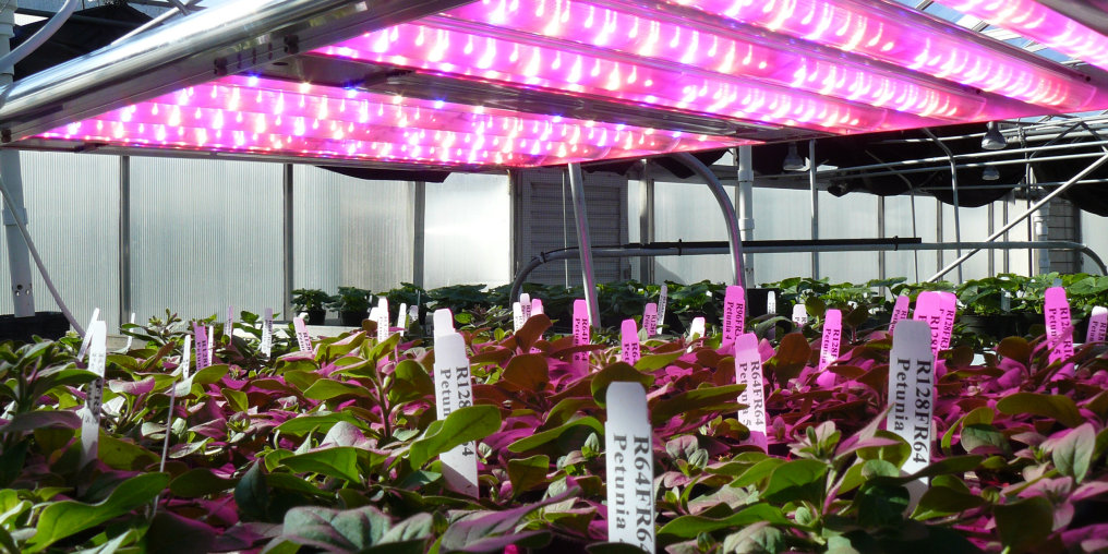 Grow your business in the flourishing Horticulture market