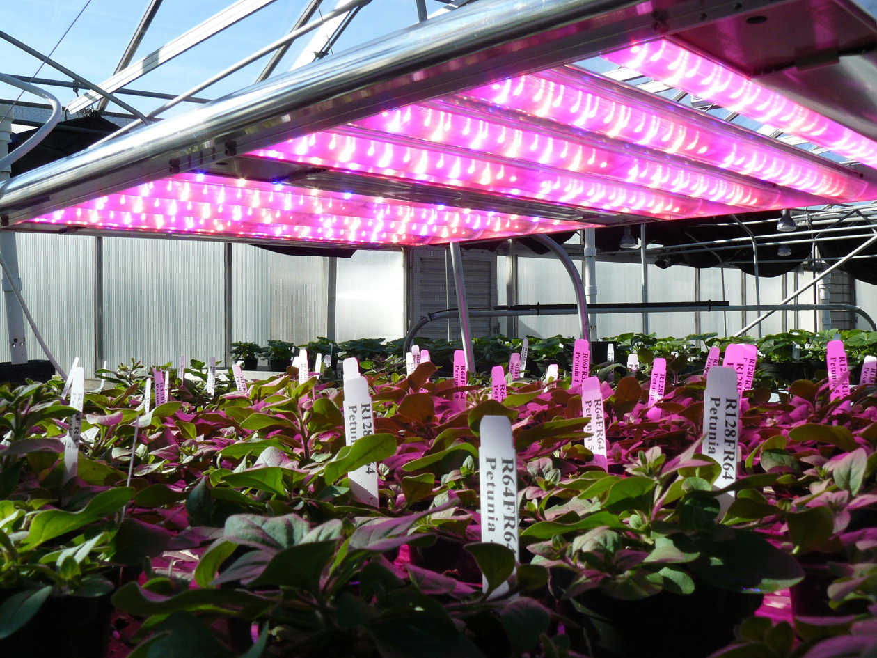 Leds For Horticulture Lighting Osram Opto Semiconductors