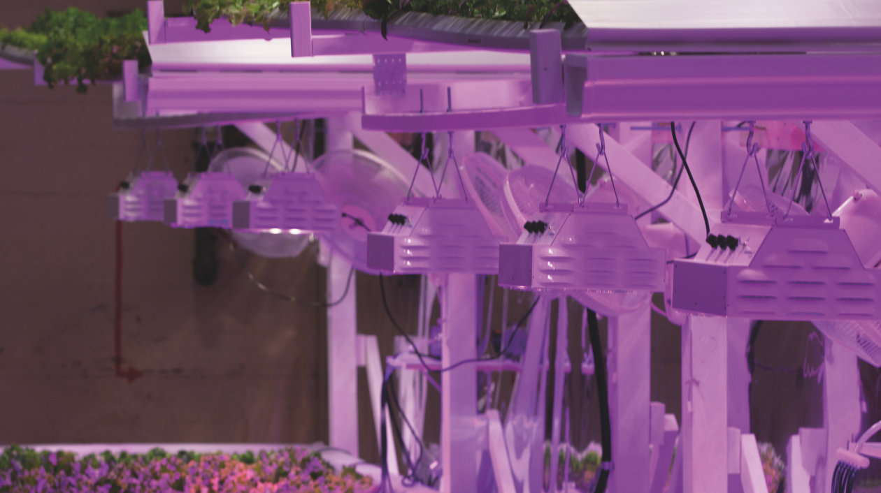 Application - Horticulutre Lighting - LEDs for all types of plants and flowers