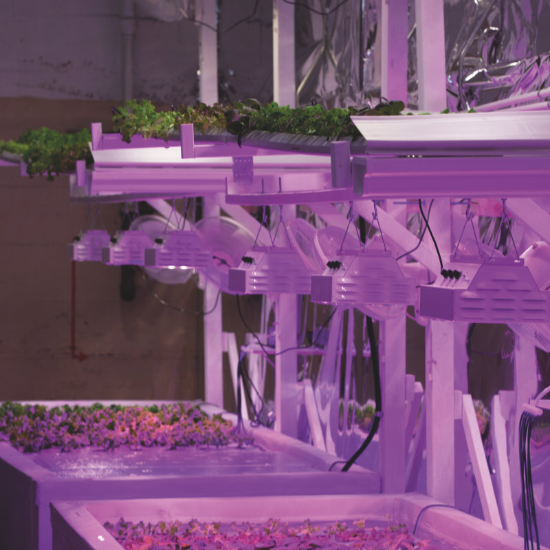 LEDs magazine: Horticultural Lighting