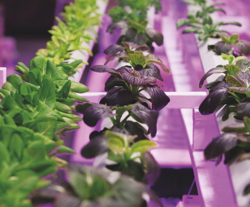 Horticulture lighting brochure
