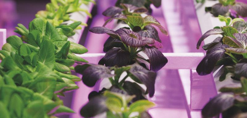 Download: Horticulture lighting brochure