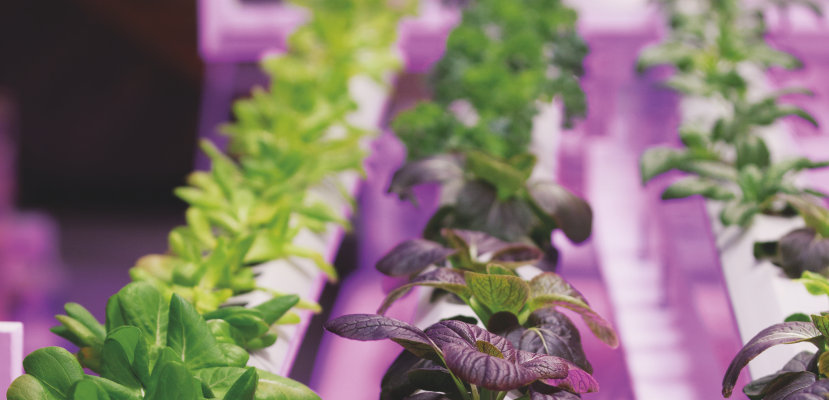 Horticulture: Light is flourishing