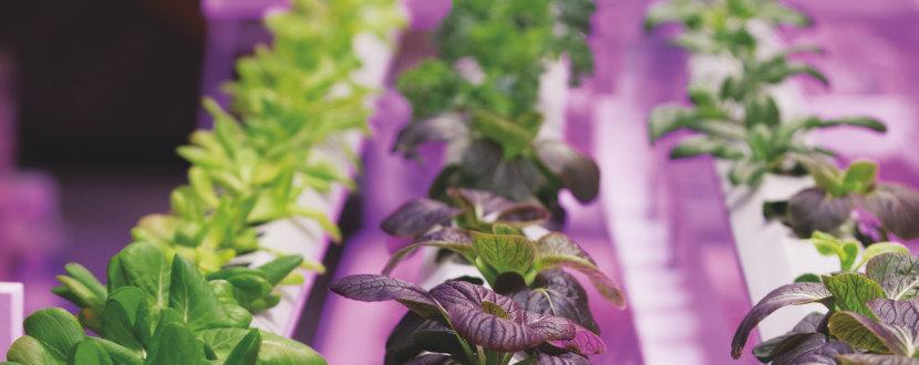 Zahradnictví: Světlo je vzkvétající