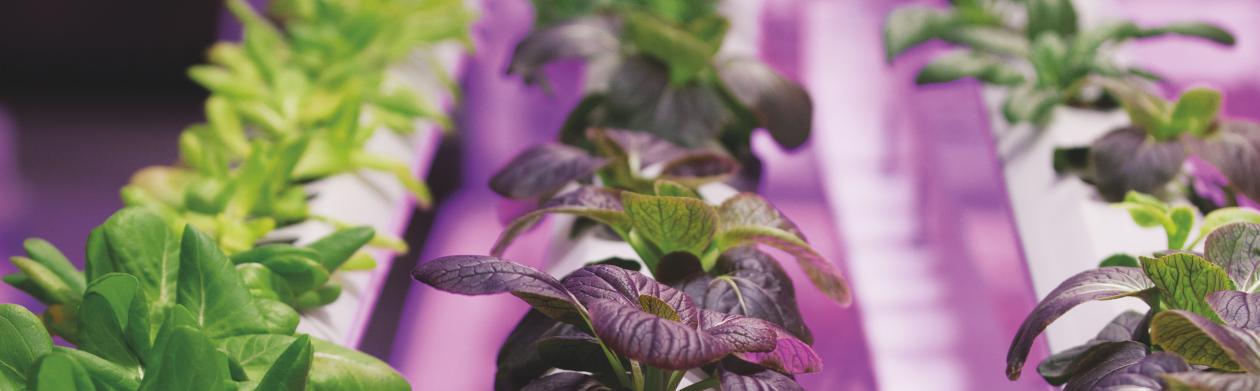 欧司朗光电半导体的植物照明视频