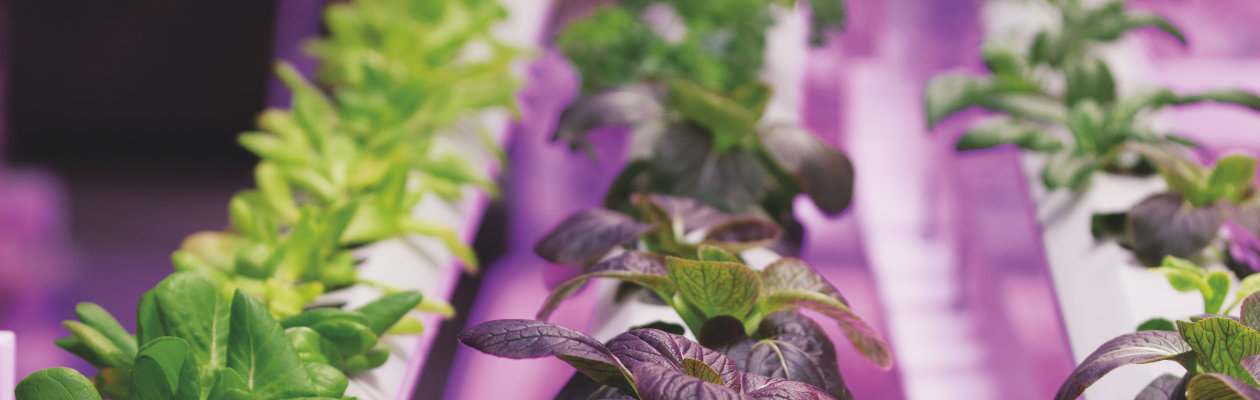 Horticulture Video by OSRAM Opto Semiconductors
