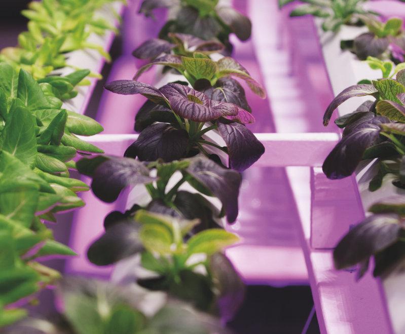 La culture de plantes dans des villes révolutionne l'approvisionnement alimentaire dans les centres