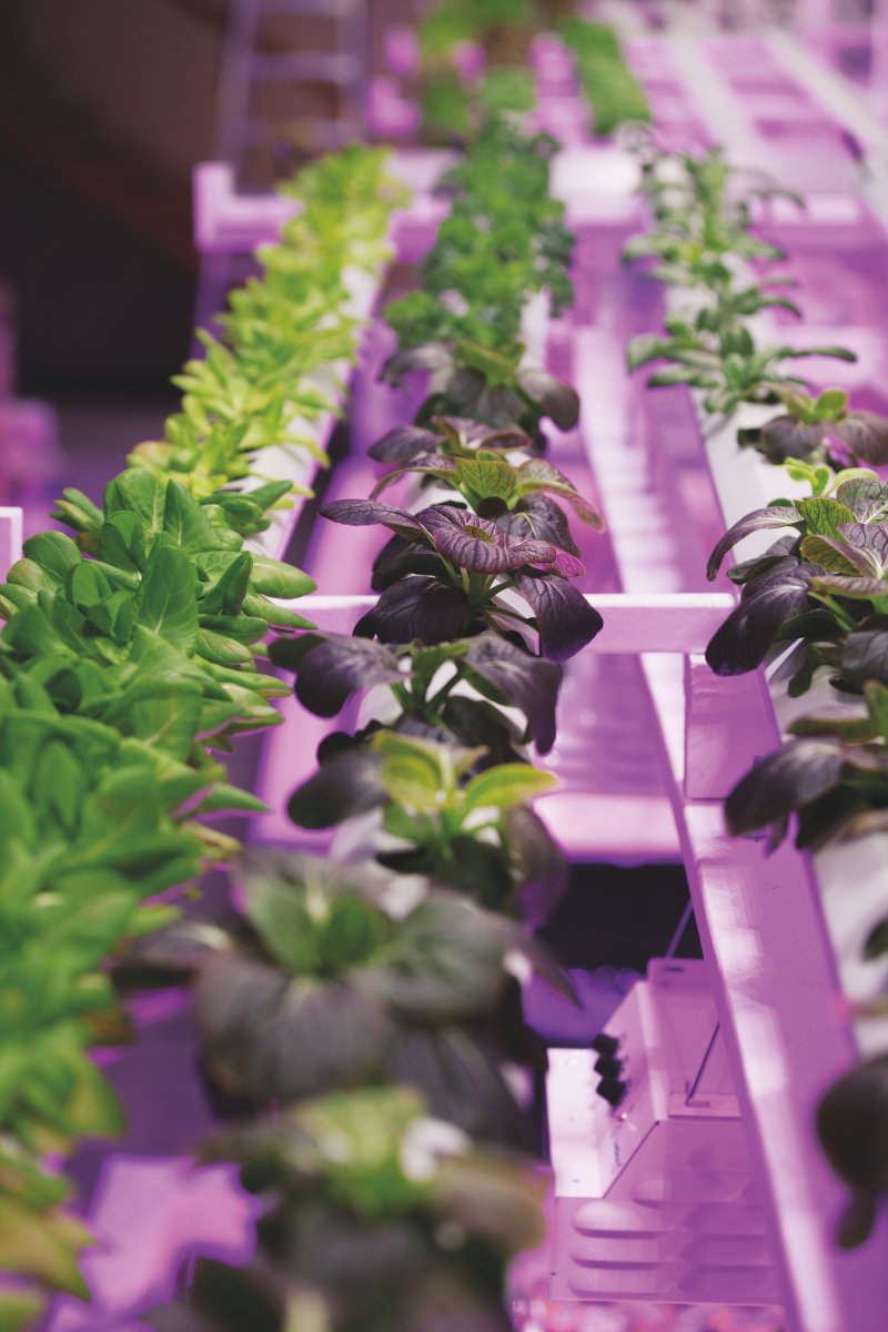 Watch OSRAM Opto Semiconductors Horticulture / Agriculture Video