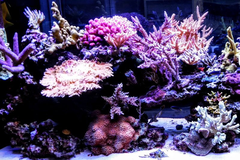 Osram Opto Semiconductors' Oslon LEDs aid in the creation of ultimate LED reef aquarium fixtures