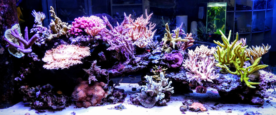 Success Story: OSRAM LEDs provide lighting environment for corals to thrive