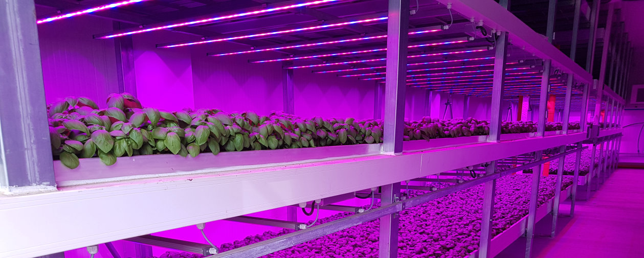 Vertical Farming with Horticultural LED lighting