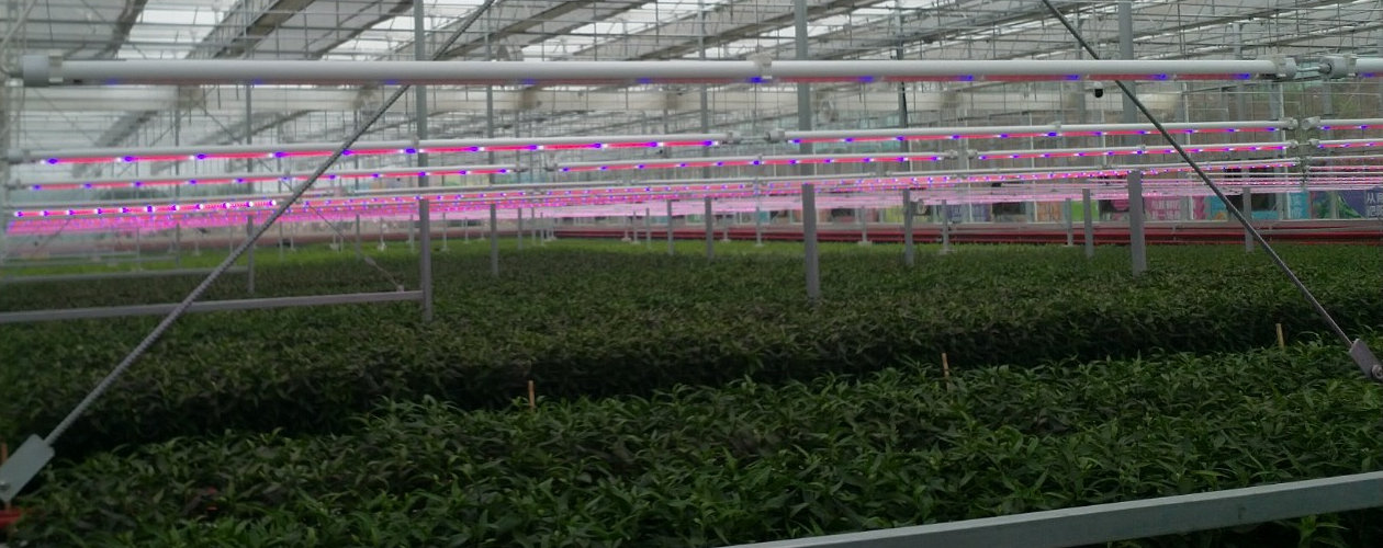 With the completion of the greenhouses in the Chinese province of Hebei, fruit, vegetables and various flowers have been planted in a total area of 24,000 square meters.