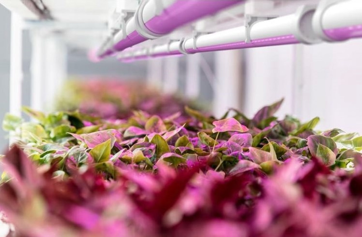 At around 3 µmol/J, BIOLED from Tzuba Vision is one of the most effective solutions in the horticulture sector.