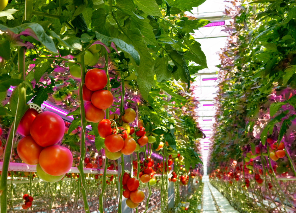 What plants want: Osram technology helps provide fresh food around the globe