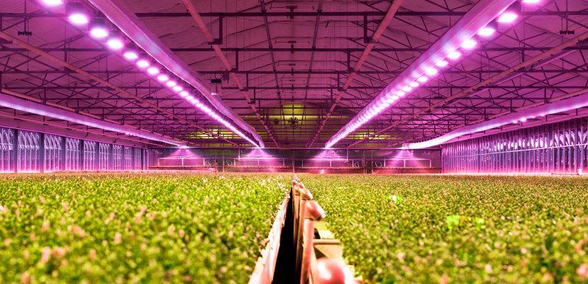Leds Opto For LightingOsram Horticulture Semiconductors cFKJTl13