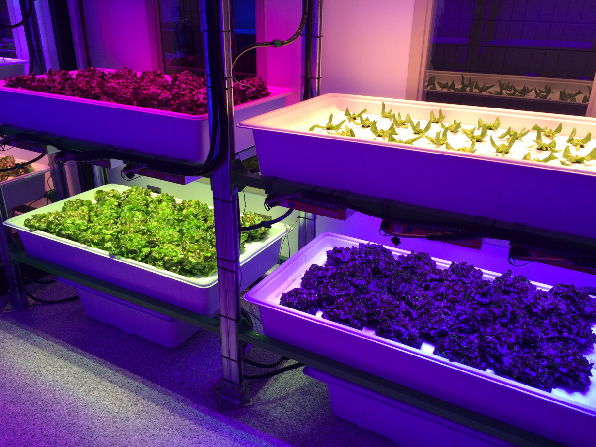 horticultural LED light