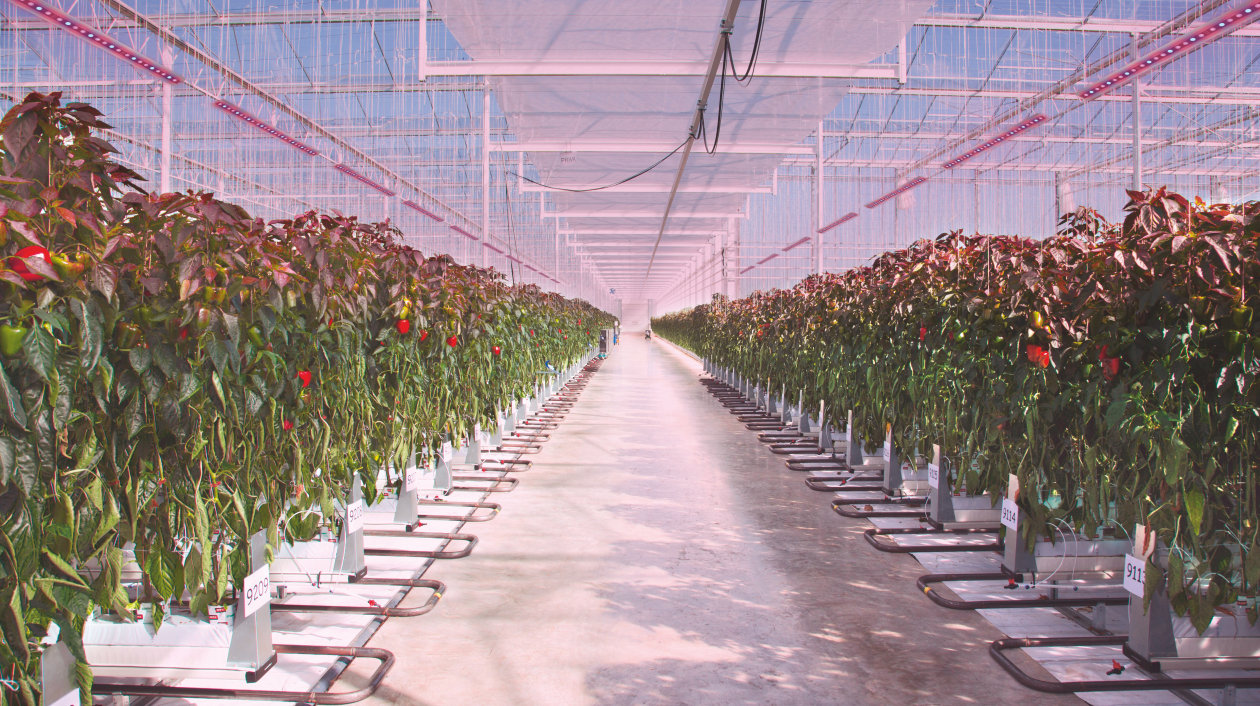Application - Horticulture Lighting - Grow your business