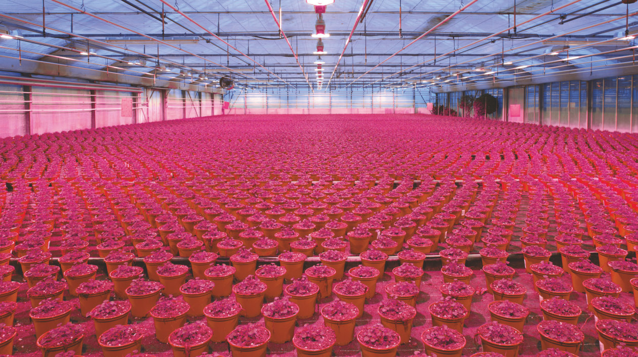 Application - Horticulture Lighting - hyper-red and far red LED for flowers