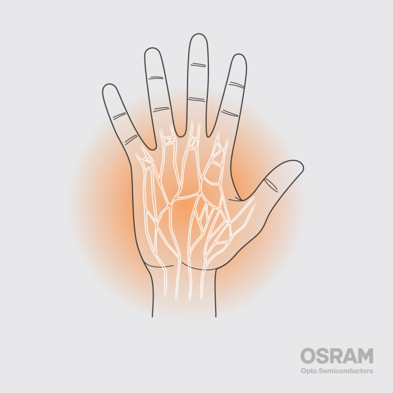 Biometric identification: Handveins