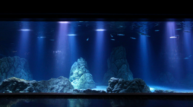 Natural lighting environment of the sea at the Israel Aquarium by OSRAM