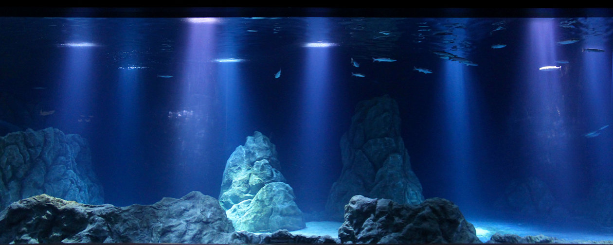 OSRAM Opto Semiconductors imitates the natural lighting environement of the sea at the Israel Aquarium