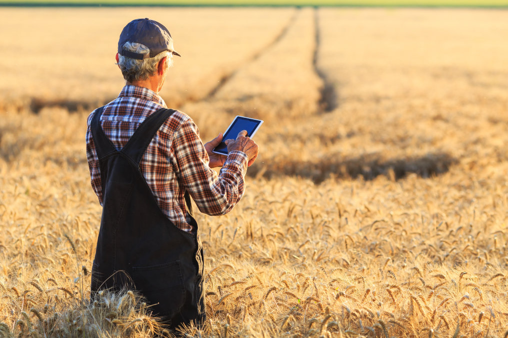 SFH 4736 helps farmers monitor the growth of their crops and plan the ideal time for harvest.
