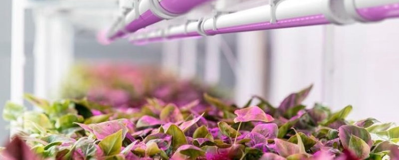 TzubaVision relies on OSRAM expertise for its largest international horticulture project